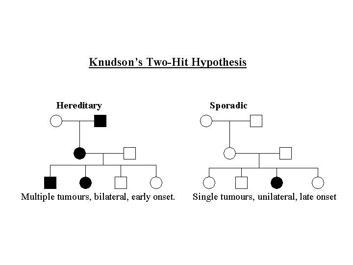 Knudsons Two Hit Hypothesis Note That The Hereditary Pedigree Appears Similar To One Of A Dominant Trait Suppose There Are 1 Million Target Cells And
